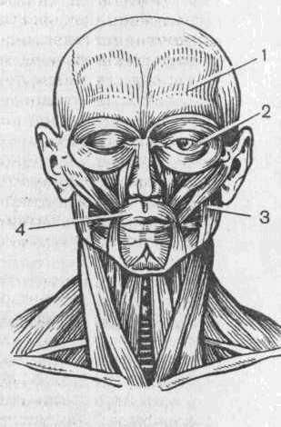 Малюнок живої голови.